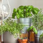 Założyłam ziołowy ogródek we własnej kuchni – Ty też możesz!