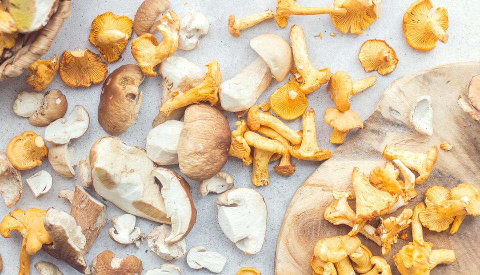 Zbieramy grzyby – jak się do tego przygotować?
