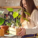 Sprawdzone sposoby na poprawne rozmnażanie roślin doniczkowych