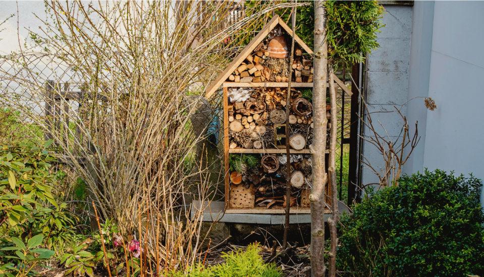 Jak zrobić domek dla owadów? Instrukcja krok pokroku