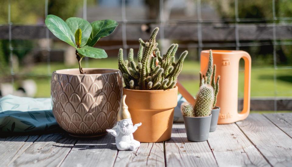 Przenosimy rośliny pokojowe na lato do ogrodu